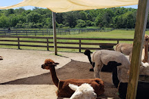 Island Alpaca Company of Martha's Vineyard, Oak Bluffs, United States