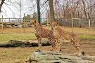 Southwick's Zoo