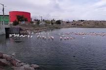 Laguna Chiquichano, Trelew, Argentina