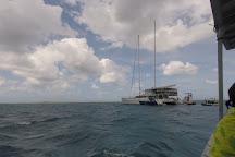 Michaelmas Cay, Cairns, Australia