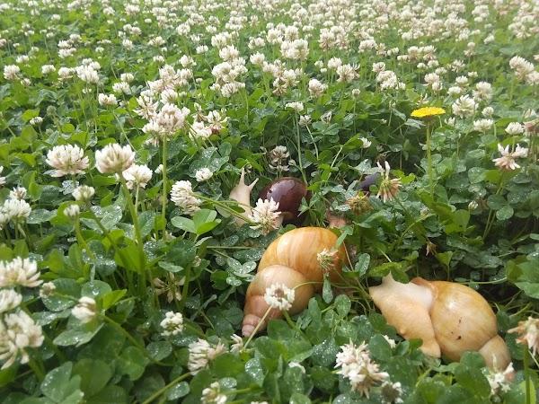 Сайты, доставка цветов г новотроицк оренбургская область