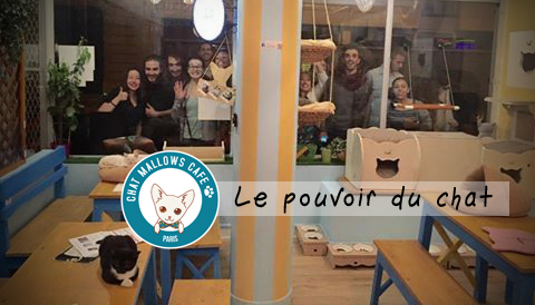 Chat Mallows Cafe