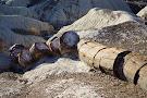 Giant Logs