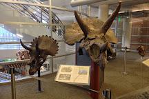 University of California Museum of Paleontology, Berkeley, United States