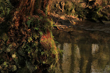 Ecclesall Woods, Sheffield, United Kingdom