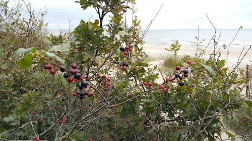 Giruliai nudist beach