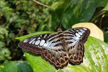 Butterfly Garden, Singapore, Singapore