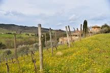 Montecalvi Winery, Greve in Chianti, Italy