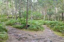 Fontainebleau Forest (Foret de Fontainebleau), Fontainebleau, France
