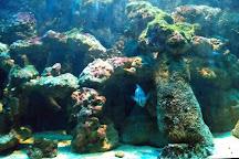Samui Aquarium and Tiger Zoo, Ko Samui, Thailand