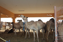 Camel Souk, Al Ain, United Arab Emirates