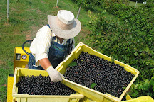 Morgan Creek Vineyards, Harpersville, United States