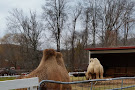 Green Chimneys Farm & Wildlife Center