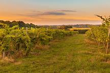 Astley Vineyard, Astley, United Kingdom