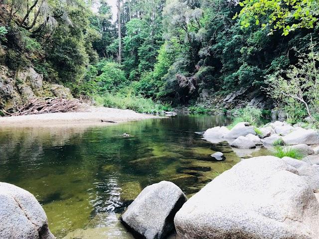 Garden of Eden - Henry Cowell Redwoods State Park