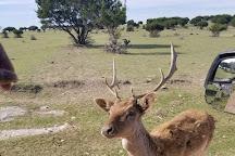 Topsey Exotic Ranch & Drive Thru Safari, Copperas Cove, United States