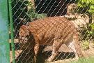 Parque Zoobotanico de Brusque
