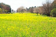 Showa Kinen Park, Tachikawa, Japan