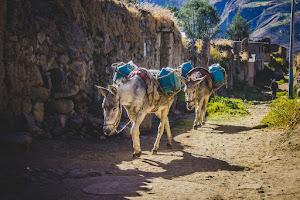 Colca Peru Tours 6