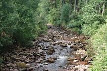 Glengarra Woods, Cahir, Ireland