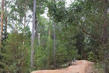Pemberton Mountain Bike Park, Pemberton, Australia