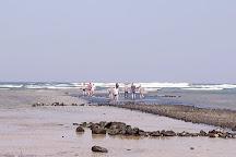 Shark Bay, Santa Maria, Cape Verde