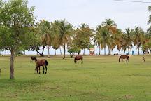 Vieques Island, Isla de Vieques, Puerto Rico