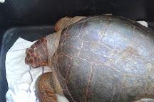 Sea Turtle Rescue Centre, Glyfada, Greece