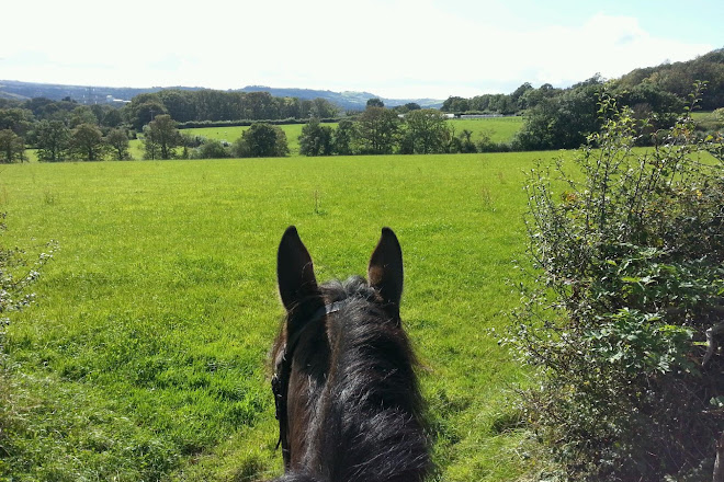 Visit Finlake Riding Centre on your trip to Chudleigh