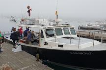 Acadia Fishing Tours, Southwest Harbor, United States