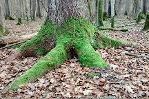 Bialowieza Forest, Bialowieza, Poland