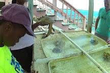 Caicos Conch Farm, Providenciales, Turks and Caicos