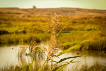 Rainham Marshes R.S.P.B. Nature Reserve, Purfleet, United Kingdom