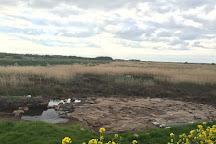 Lunt Meadows Nature Reserve, Liverpool, United Kingdom