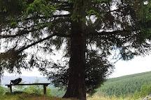 Glentress Forest, Peebles, United Kingdom
