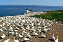 Parc national de l'Ile-Bonaventure-et-du-Rocher-Perce, Perce, Canada