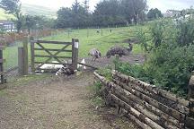 Animal Quackers, Bacup, United Kingdom