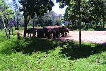 Udawalawe National Park, Uda Walawe National Park, Sri Lanka