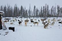 Dog Sled Rides of Winter Park, Fraser, United States