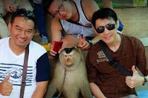 Chiang Mai Monkey Centre, Mae Rim, Thailand