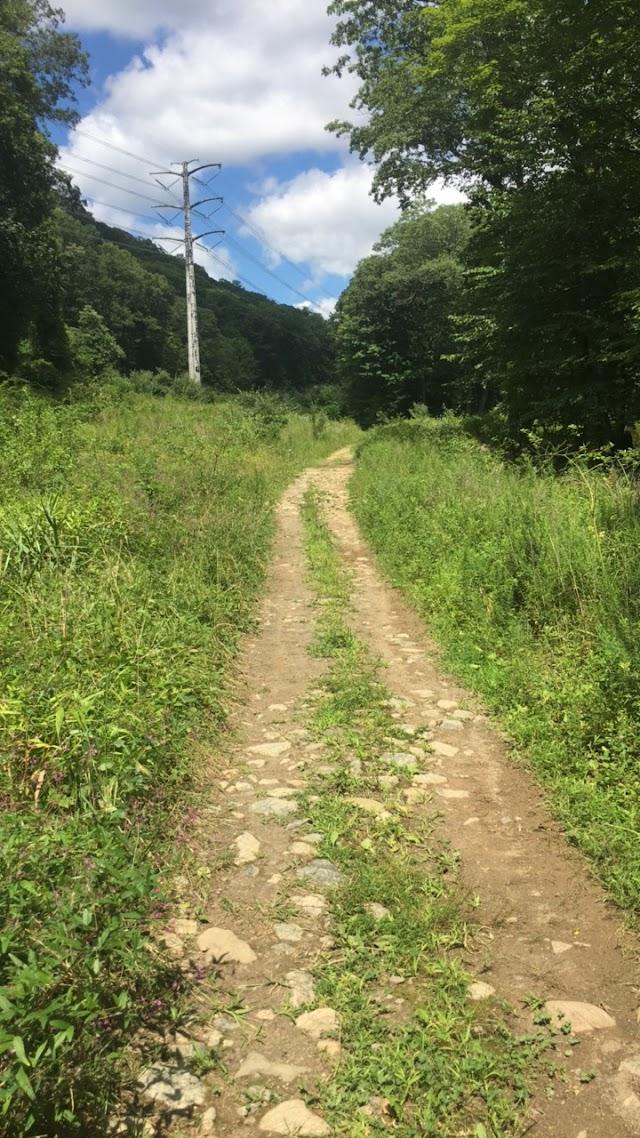 Pine Meadow Trail