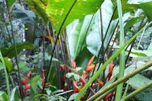 Le bagne des Annamites, Montsinery-Tonnegrande, French Guiana