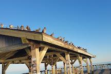 Myrtle Beach State Park, Myrtle Beach, United States