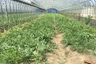 Kinokuni Farm