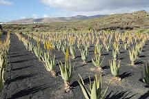 Aloe Plus Lanzarote, Punta Mujeres, Spain