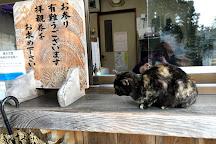 Maki Odo, Bungotakada, Japan