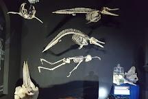 Museo de La Ballena, La Paz, Mexico