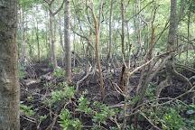 Mangrove Swamp Park, Lumut, Malaysia