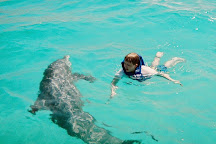 Panama City Beach Dolphin Tours & More, Panama City, United States