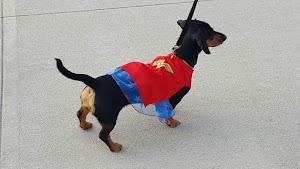 TLC In-Home Pet Care